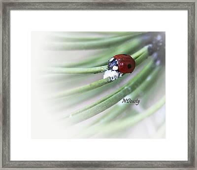 Ladybug On Pine Framed Print