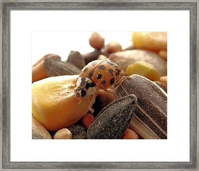 Ladybug On The Run Framed Print
