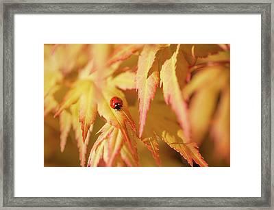 Ladybug Think Good Luck Framed Print by Jenny Rainbow