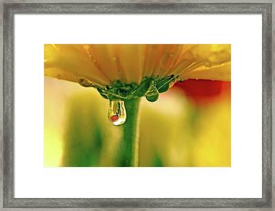 Ladybug View Framed Print