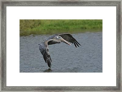 Lagoon Flyby Framed Print by Fraida Gutovich