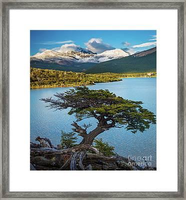 Laguna Capri Tree Framed Print