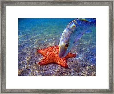 Laguna Stars Framed Print by Kelly     ZumBerge