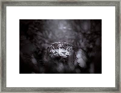 Lair Of The Swamp Queen Framed Print