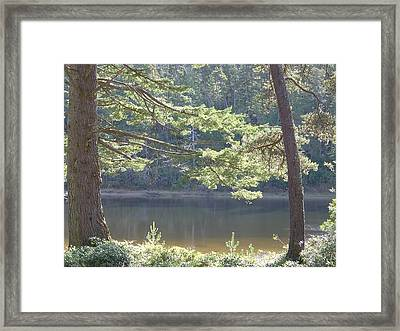Framed Print featuring the photograph Lake Chamberlin by Angi Parks