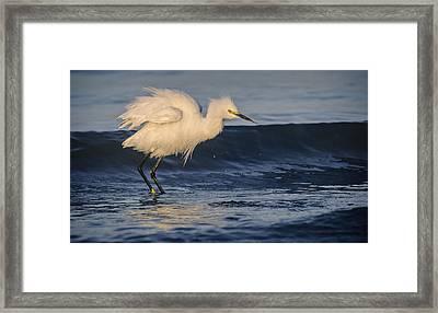 Lake Chapala Egret Framed Print by Dane Strom