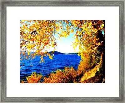 Lake Coeur D'alene Through Golden Leaves Framed Print by Carol Groenen