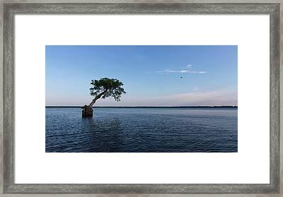 Lake Disston Cypress #2 Framed Print by Paul Rebmann