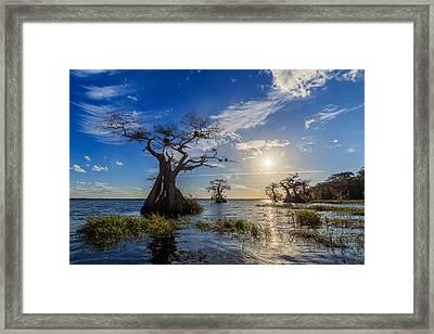 Lake Disston Cypress Paradise Framed Print