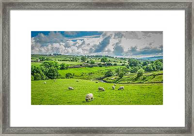 Lake District Sheep Pasture Framed Print by Gestalt Imagery