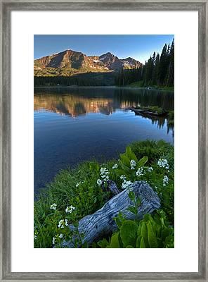 Lake Irwin Wildflowers Framed Print by Mike Berenson