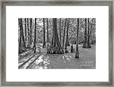 Lake Martin Framed Print by Scott Pellegrin