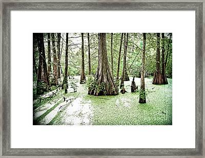 Lake Martin Swamp Framed Print by Scott Pellegrin