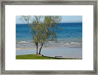 Framed Print featuring the photograph Lake Michigan Birch Tree Bench by LeeAnn McLaneGoetz McLaneGoetzStudioLLCcom