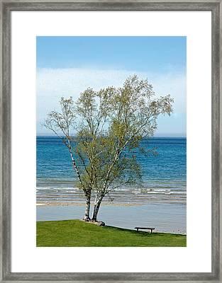 Framed Print featuring the photograph Lake Michigan Birch Tree by LeeAnn McLaneGoetz McLaneGoetzStudioLLCcom