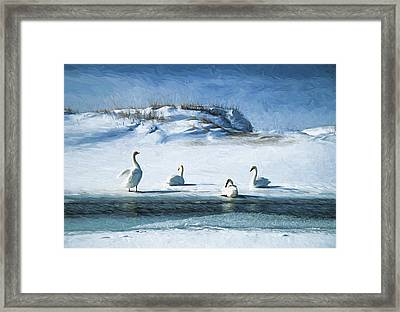 Lake Michigan Swans Framed Print by Dennis Cox