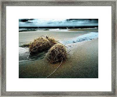 Lake Michigan Tumbleweed Framed Print