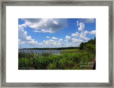 Lake Tarpon Framed Print by Barbara Bowen