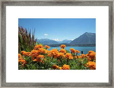 Lake Thunersee Framed Print by Andy Myatt