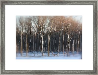 Lake Trees Of Winter Framed Print by Bruce McEntyre