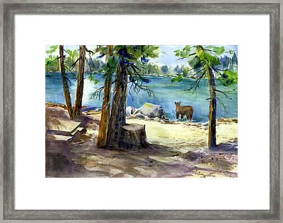 Lake Valley Bear Framed Print