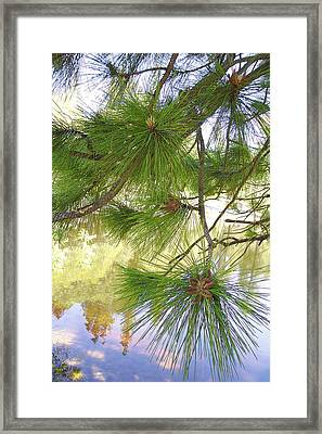 Lake View With Ponderosa Pine Framed Print