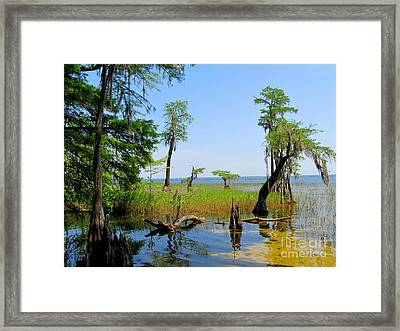 Lake Waccamaw Nc Framed Print