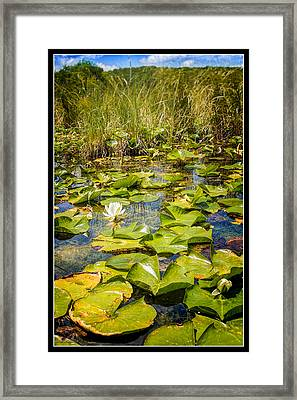 Lake Water Lily  Framed Print