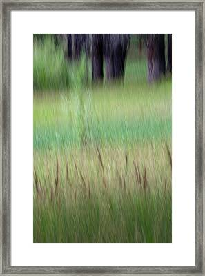 Lake's Edge Framed Print
