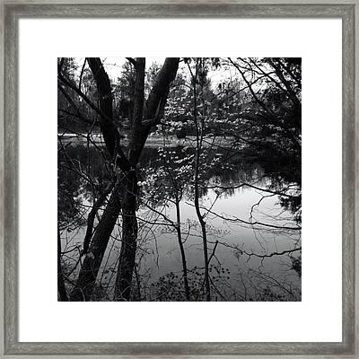 Lakeside Dogwood Reflection Framed Print by Raven Moon