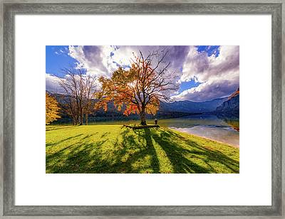 Lakeside Solitude Framed Print by Ales Krivec