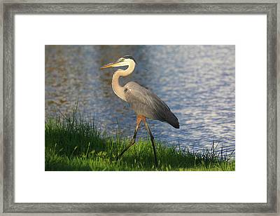 Framed Print featuring the photograph Lakeside Stroll by Donna Kennedy