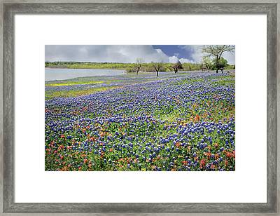 Framed Print featuring the photograph Lakeside Texas Bluebonnets by David and Carol Kelly