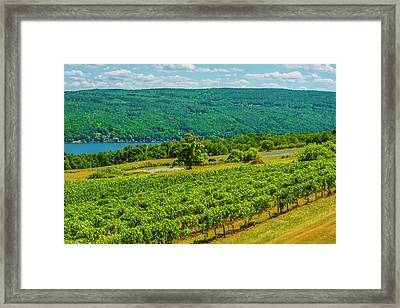 Framed Print featuring the photograph Lakeside Vineyard I by Steven Ainsworth