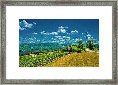 Lakeside Vineyard II Framed Print by Steven Ainsworth