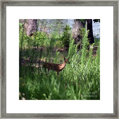 Lakeside Youngster Framed Print