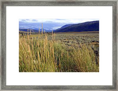 Lamar Valley 2 Framed Print by Marty Koch