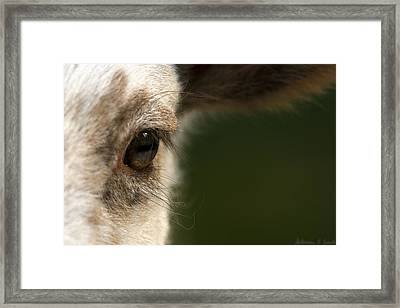 Lamb Eyelashes Framed Print by Warren Sarle