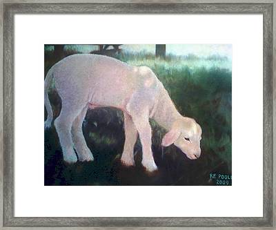Lamb Of God Framed Print by Rebecca Poole