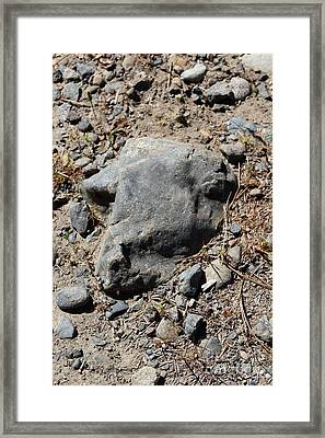 Framed Print featuring the photograph Lambchop by Marie Neder