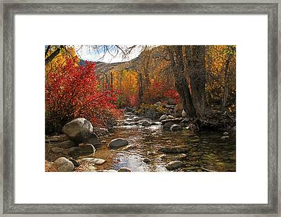 Lamoille Creek Framed Print by Donna Kennedy
