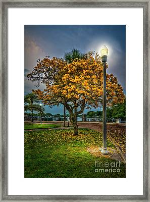 Lamp And Tree Framed Print