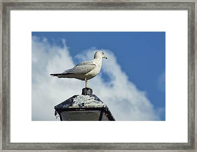 Framed Print featuring the photograph Lamp Post Eddie by Jan Amiss Photography