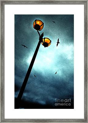 Lamps With Birds Framed Print by Meirion Matthias