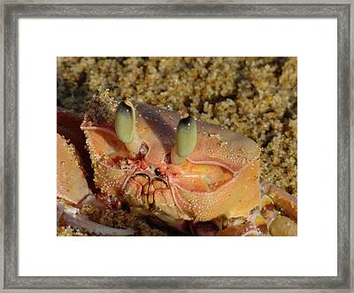 Lamu Island - Crab - Close Up 1 Framed Print