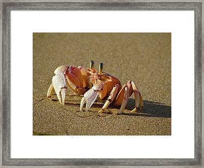 Lamu Island - Crab - Full Framed Print
