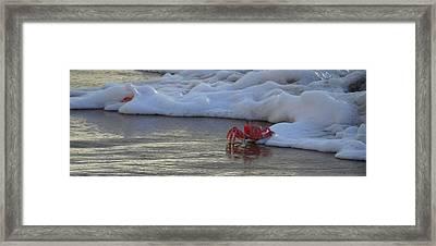 Lamu Island - Crabs Playing At Sunset 3.0 Framed Print