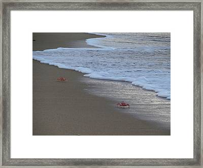 Lamu Island - Crabs Playing At Sunset 4 Framed Print