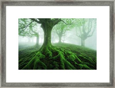 Land Of Roots Framed Print