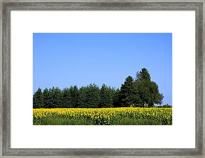 Land Of Sunflowers Framed Print by Gary Smith